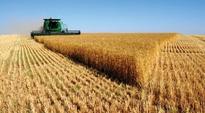 Avanza IMP en Plan Tecnológico para Generar Productos de Valor Agregado a Partir de Biomasa