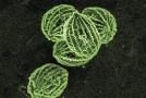 Las Microalgas como Fuente de Energía y para Procesos de Bioremediación